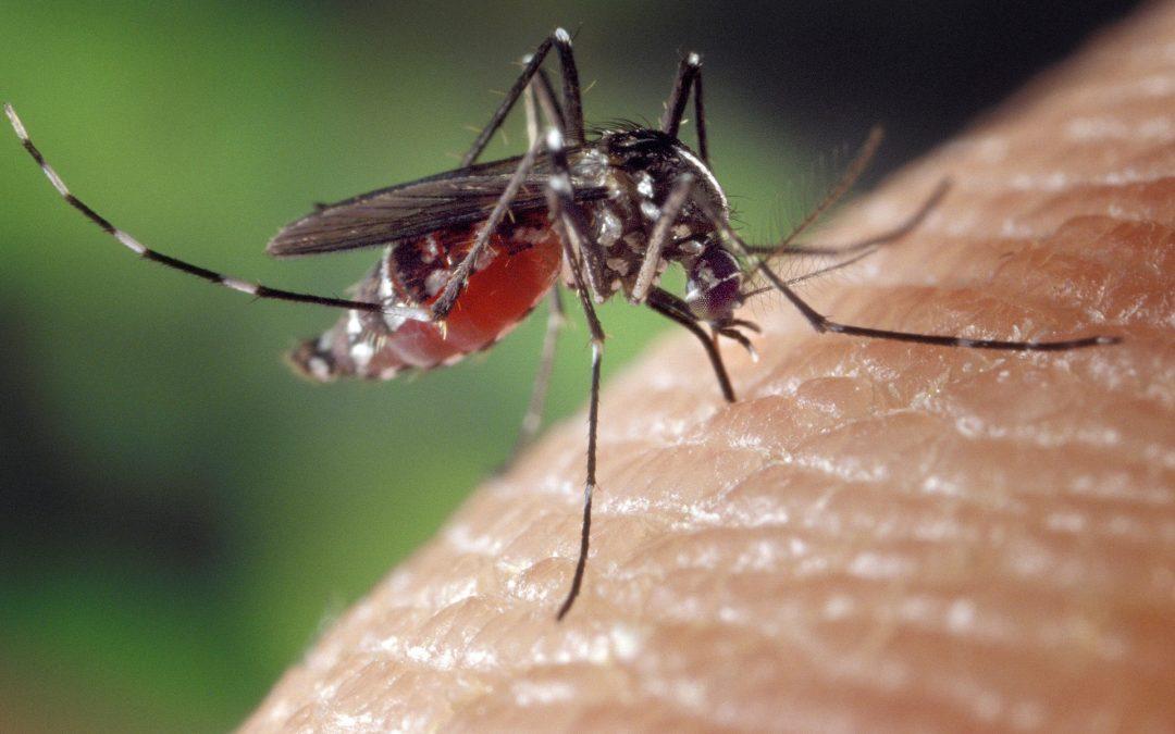 Proteja sua família contra o Aedes aegypti!